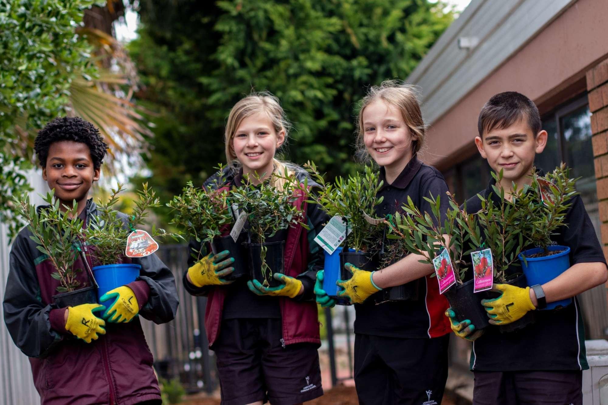 Junior School plants 01